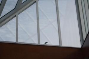 Goose peeping in at birds exhibit