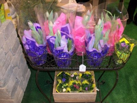 tulips w