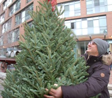 Pick the best of real Christmas trees. Photo by Forests Ontario