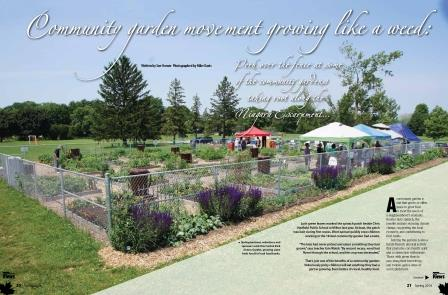 Community gardens feature by Sue Horner