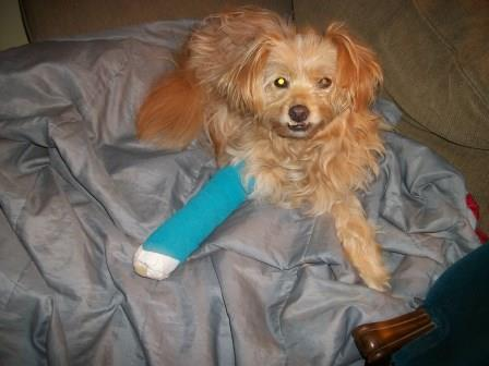 Thomas with a broken leg. Photo by Gloria Hildebrandt