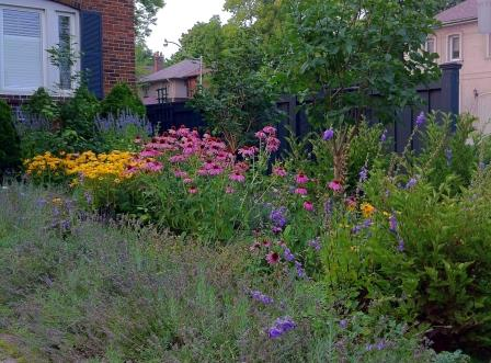 Colourful native plants attract birds & butterflies. Photo courtesy CVC.