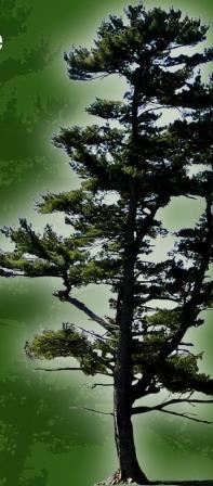 tree w